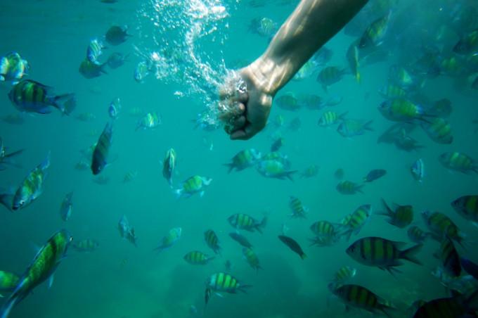 普吉岛自由行(芭东海滩,皮皮岛蛋岛,斯米兰一日游,蜜月岛双体帆船)含