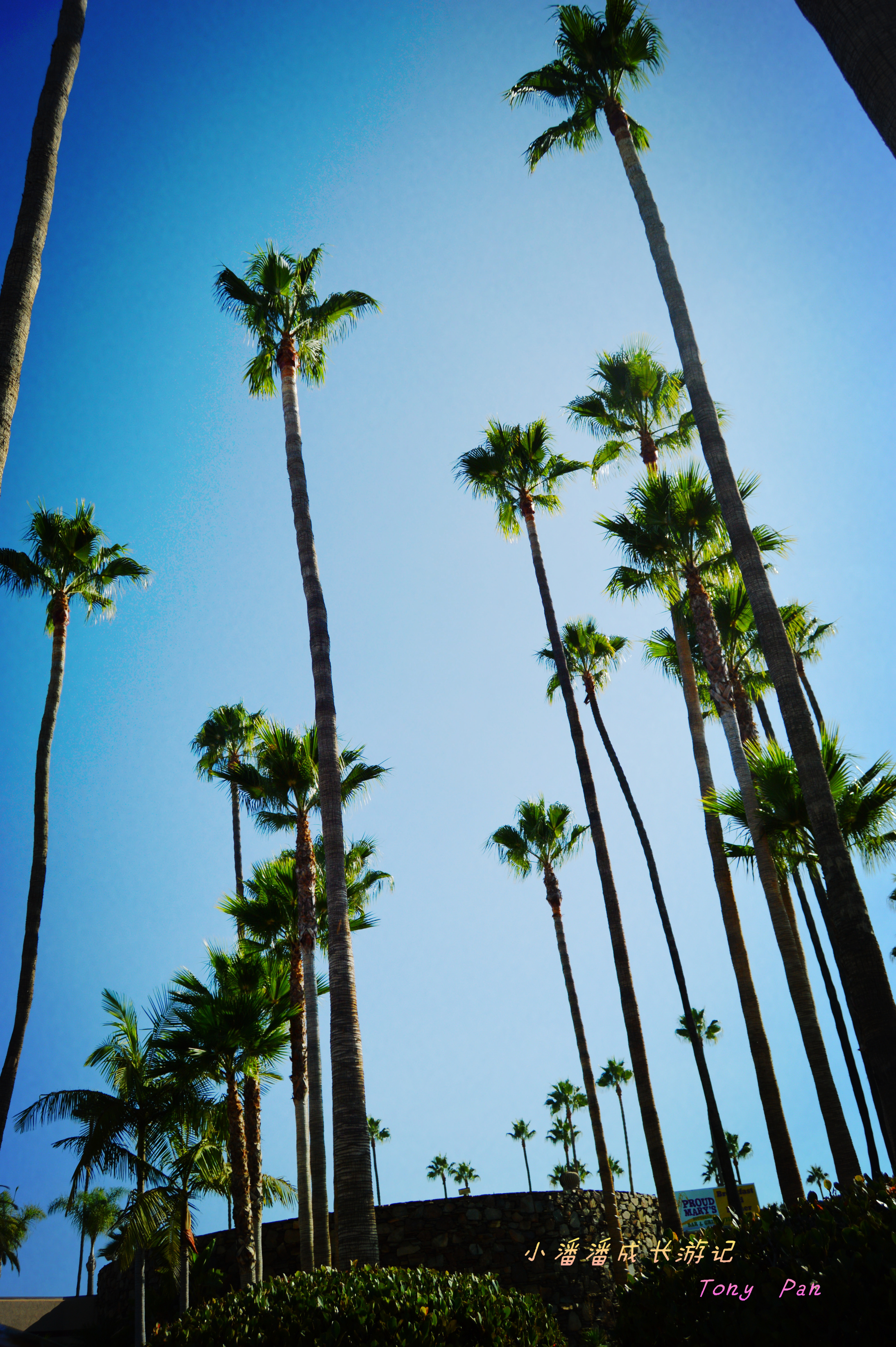 照片pk,黑白世界里的晚霞 vs 最遥远的棕榈树 - 蚂蜂窝