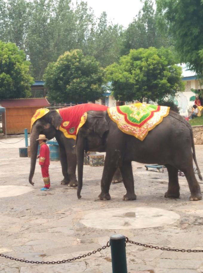 手绘七彩泰国大象