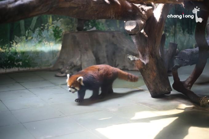 广州#长隆野生动物世界!(白虎餐厅自助餐)