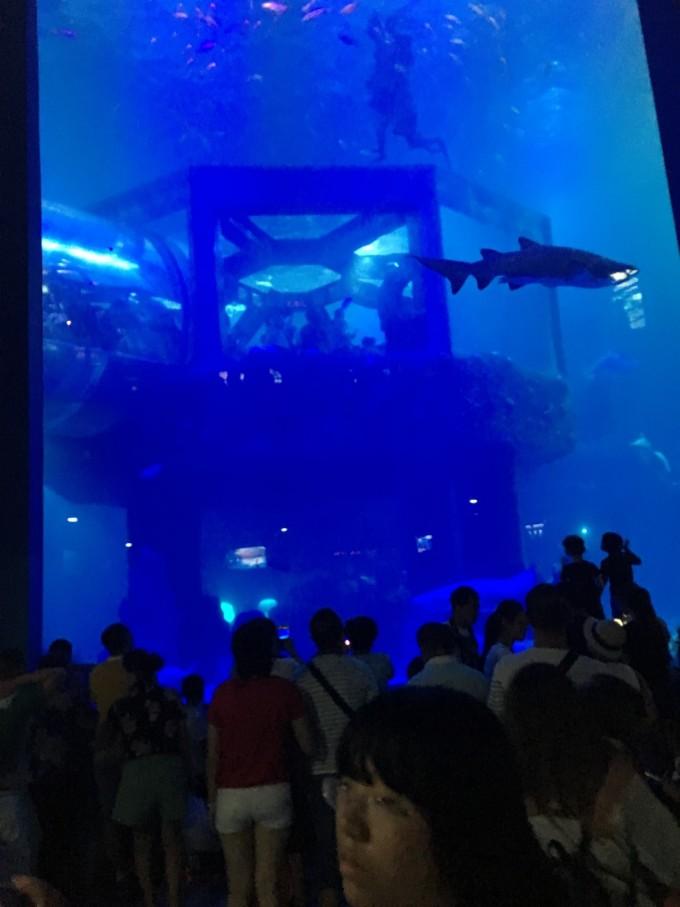 壁纸 海底 海底世界 海洋馆 水族馆 680_907 竖版 竖屏 手机
