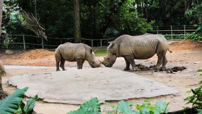 壁纸 大象 动物 犀牛 野生动物 680_383
