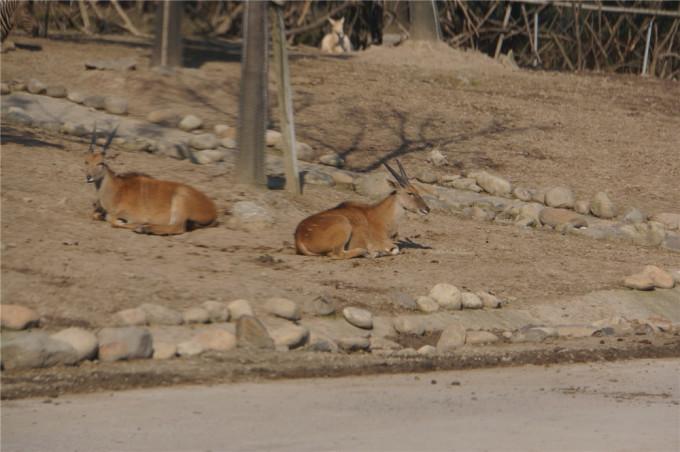 上海野生动物园的冬天
