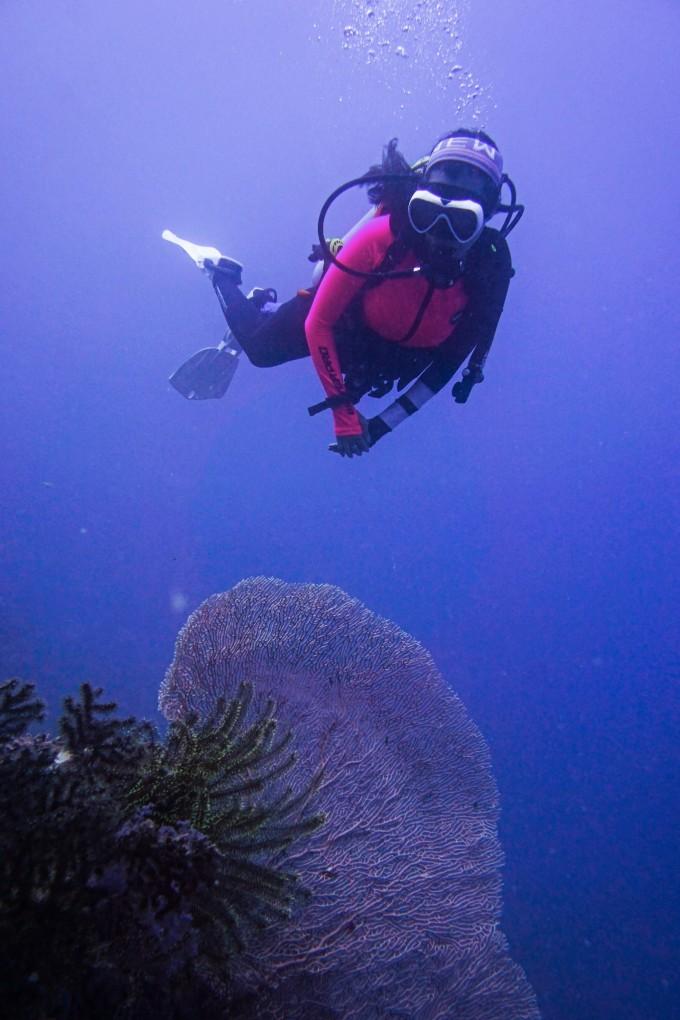 我非常喜欢逗留在这个深度,光线充足,有着非常好的能见度,围着珊瑚丛