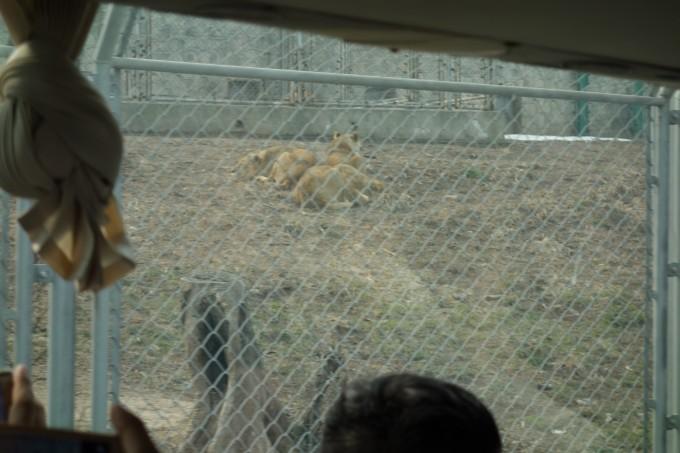 正月游--秦岭野生动物园